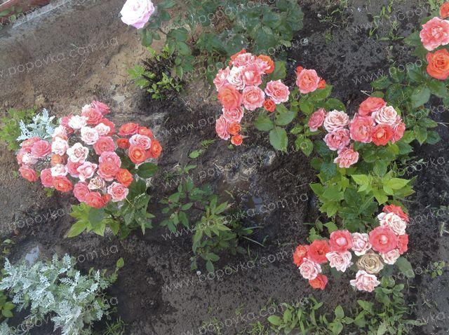 Розы, цветы на территории гостиницы